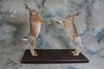 Boxing European Hares